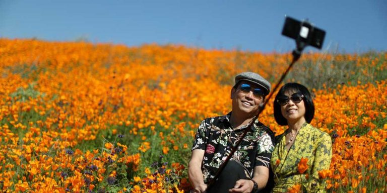 Долина Смерти: калифорнийская пустыня зацвела